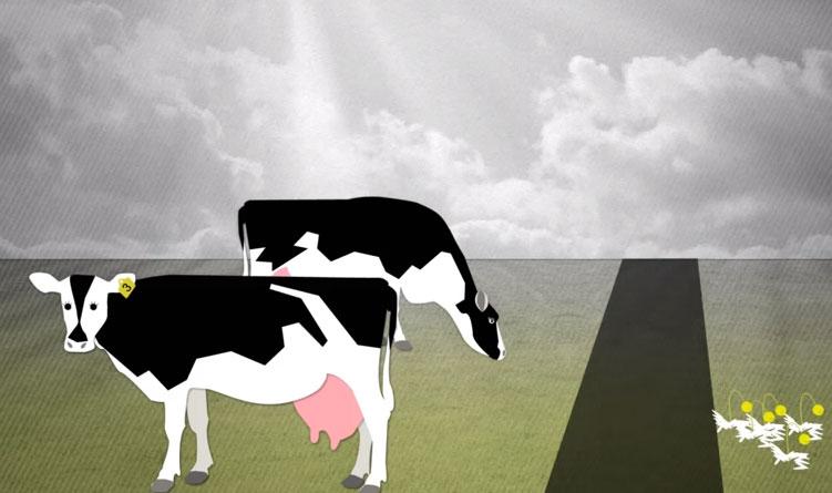 Melk, Koeien In De Wei